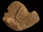 The obverse of the Old Babylonian liver model BM 92668.